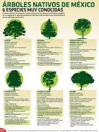 arboles y plantas nativas