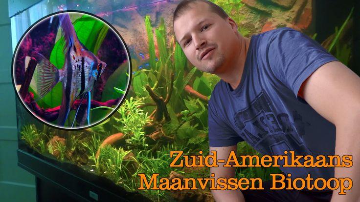 Een zuid-Amerikaans maanvissen biotoop aquarium inrichten - Dat doe je zo!
