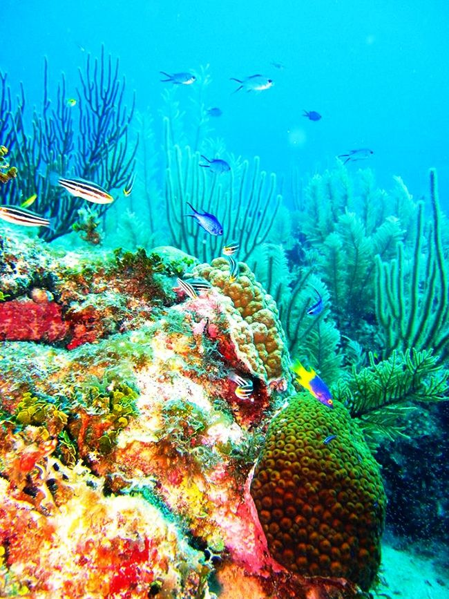 Beautiful coral at Half Moon Caye. The typical Blue Hole trip in Belize is most often followed up by a lesser advertised, yet more spectacular dive site known as Half Moon Caye Wall.