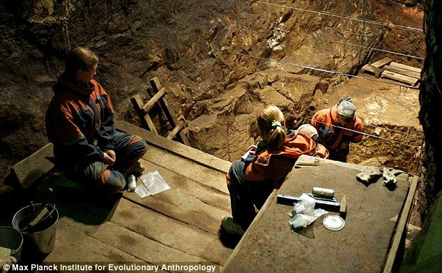 Why Am I Denisovan? - NEWS ITEM. When our ancestors first migrated out of Africa around 60,000 years ago, they were not alone. At least two of our hominid cousins had made the same journey—Neanderthals and Denisovans. Neanderthals, the better known of the two species, left Africa about 300,000 years ago and settled in Europe and parts of western Asia. The Denisovans are a much more recent addition to the human family tree.