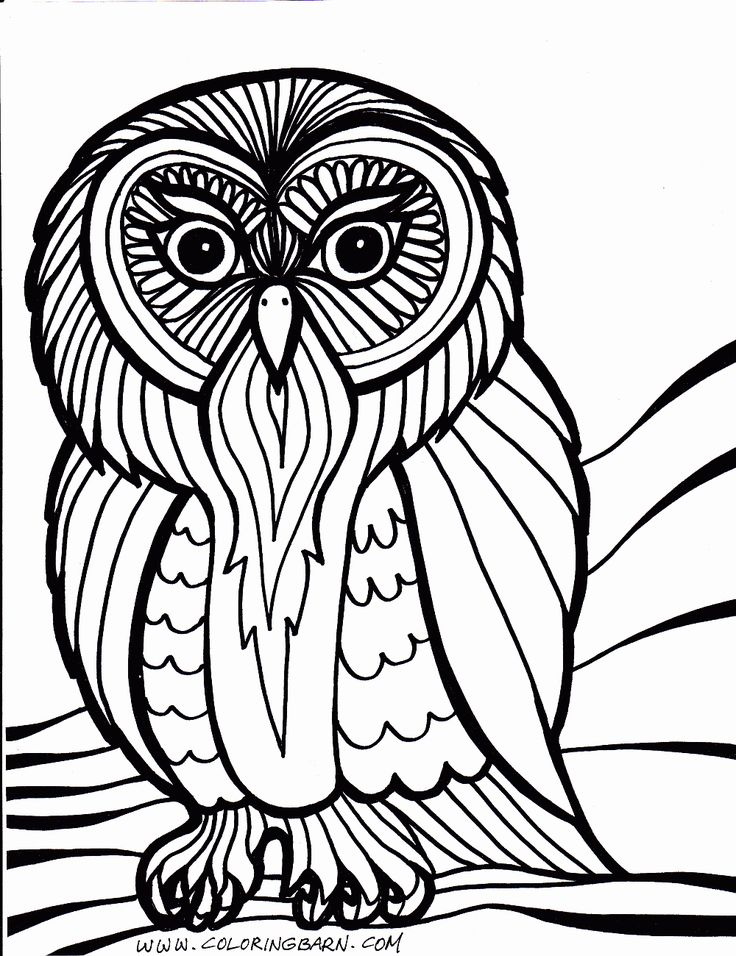 owl coloring pages free printables printable coloring pages the coloring barn - Coloring Packets