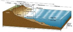 Littoral Zone - https://biologydictionary.net/littoral-zone/
