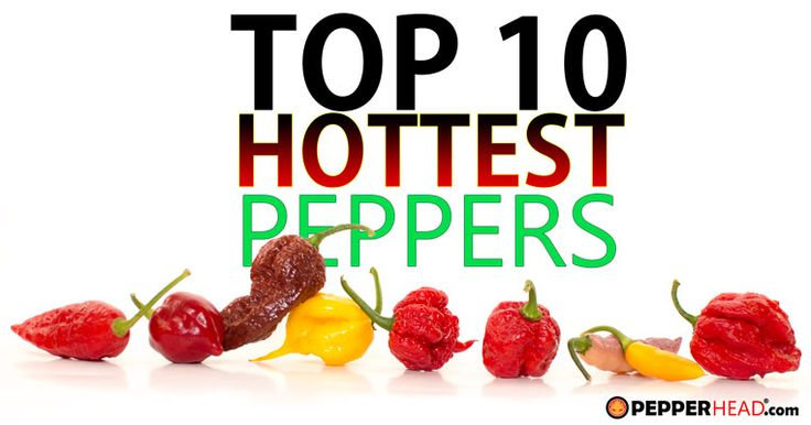 PepperHead has the most up-to-date list of the World's Hottest Peppers. The new Guinness World Records World's Hottest Pepper is the Carolina Reaper.