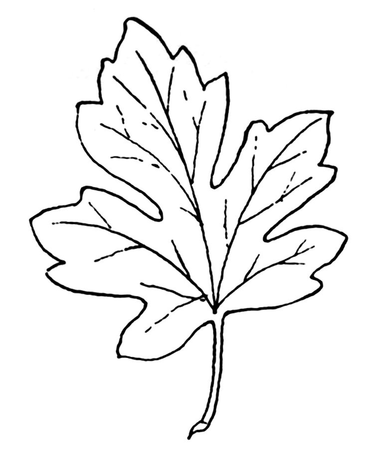 clip art of leaves | Leaf Clip Art Black And White Coloring Page Images Good Pictures