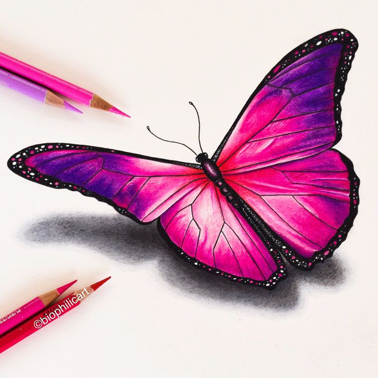 Picture of a pink butterfly drawn using colored pencils ...
