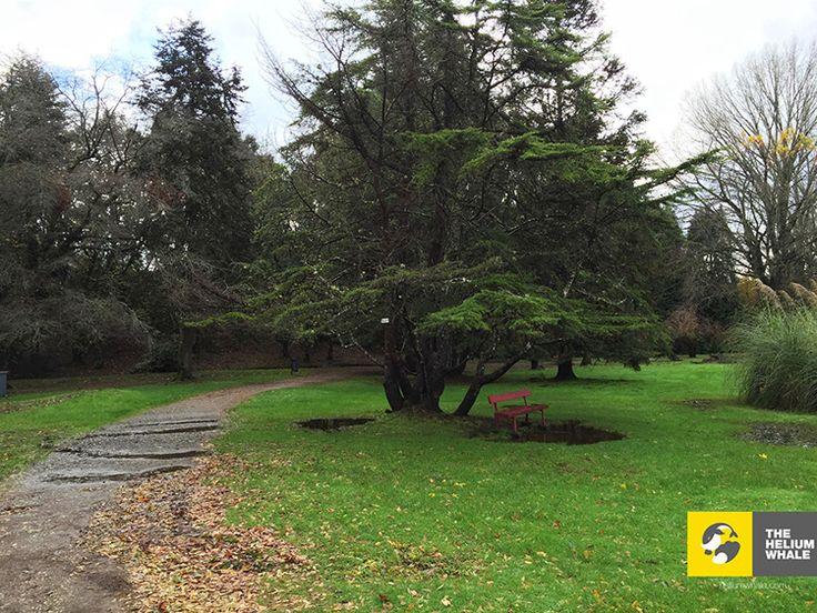 Botanic Garden, Valdivia