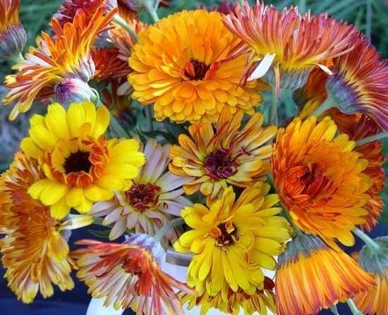 Flashback Mix (Calendula)