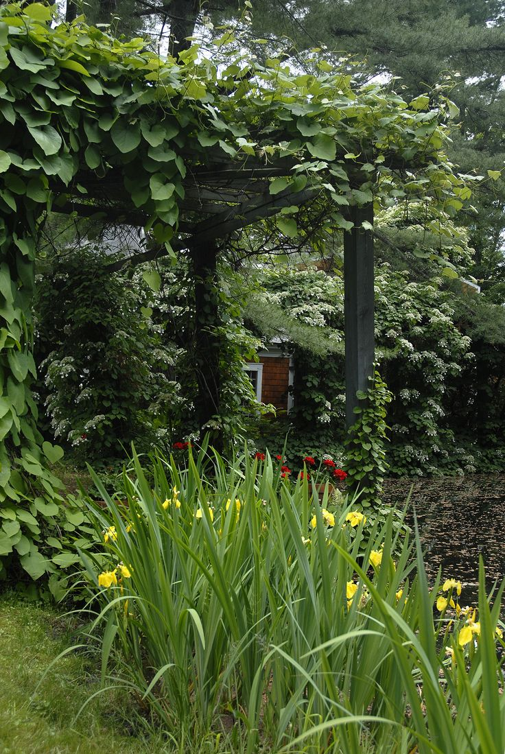 75 best outdoors images on pinterest garden ideas trellis and