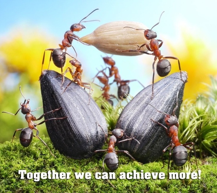 Quotes Together We Can Succeed: Teamontwikkeling