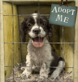 """""""whoever saves one life saves the world entire"""" adopt a shelter animal - promote no-kill policies"""
