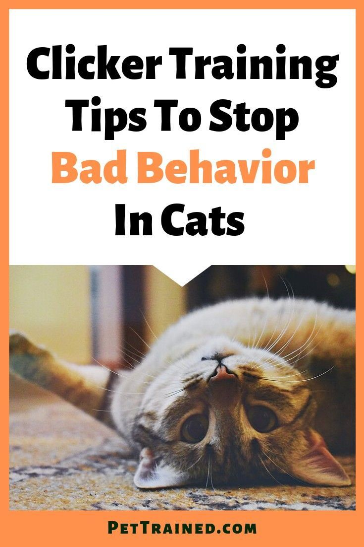 Is Your Cat Acting Out Clicker Training Your Cats To Stop Bad Behaviour Is Quite Effective And Easy Wh In 2020 Cat Training Cat Training Kittens Cat Behavior Problems