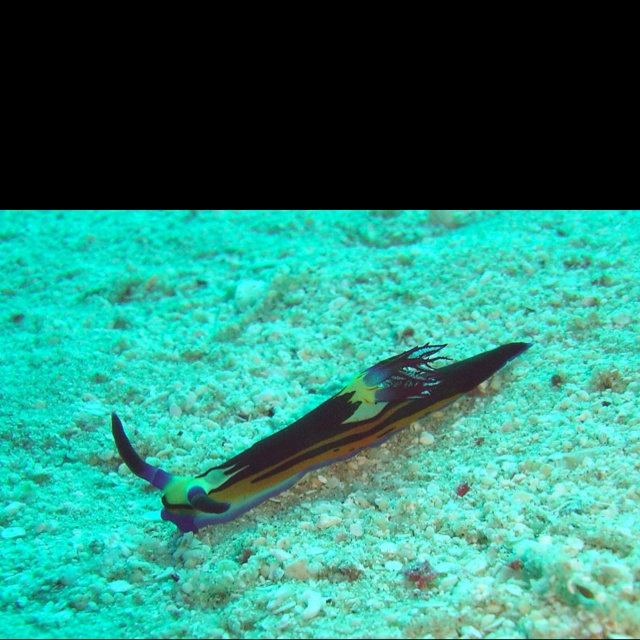 From scuba diving in the Red Sea. Saw some amazing sea creatures.