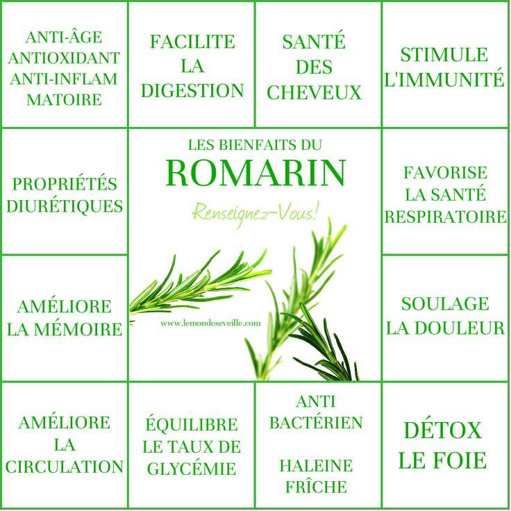 Les bienfaits du Romarin   LE ROMARIN Le Monde s'Eveille Grâce à Nous Tous…