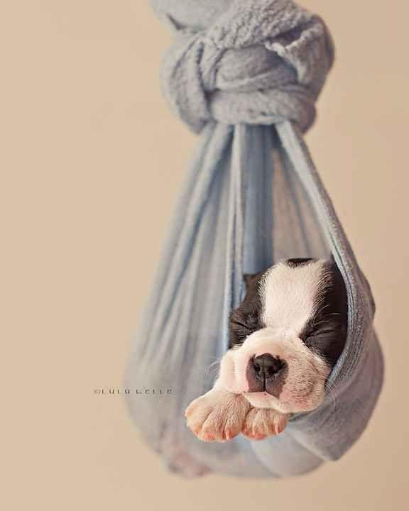 This Newborn Puppy Photoshoot Will Make Your Day