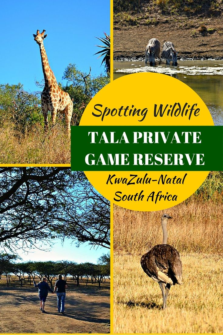 Tala Private Game Reserve KwaZulu-Natal, South Africa. Just 40mins from Durban, Tala Private Game Reserve makes for the perfect day out! With animals and birds in abundance you won't be disappointed.
