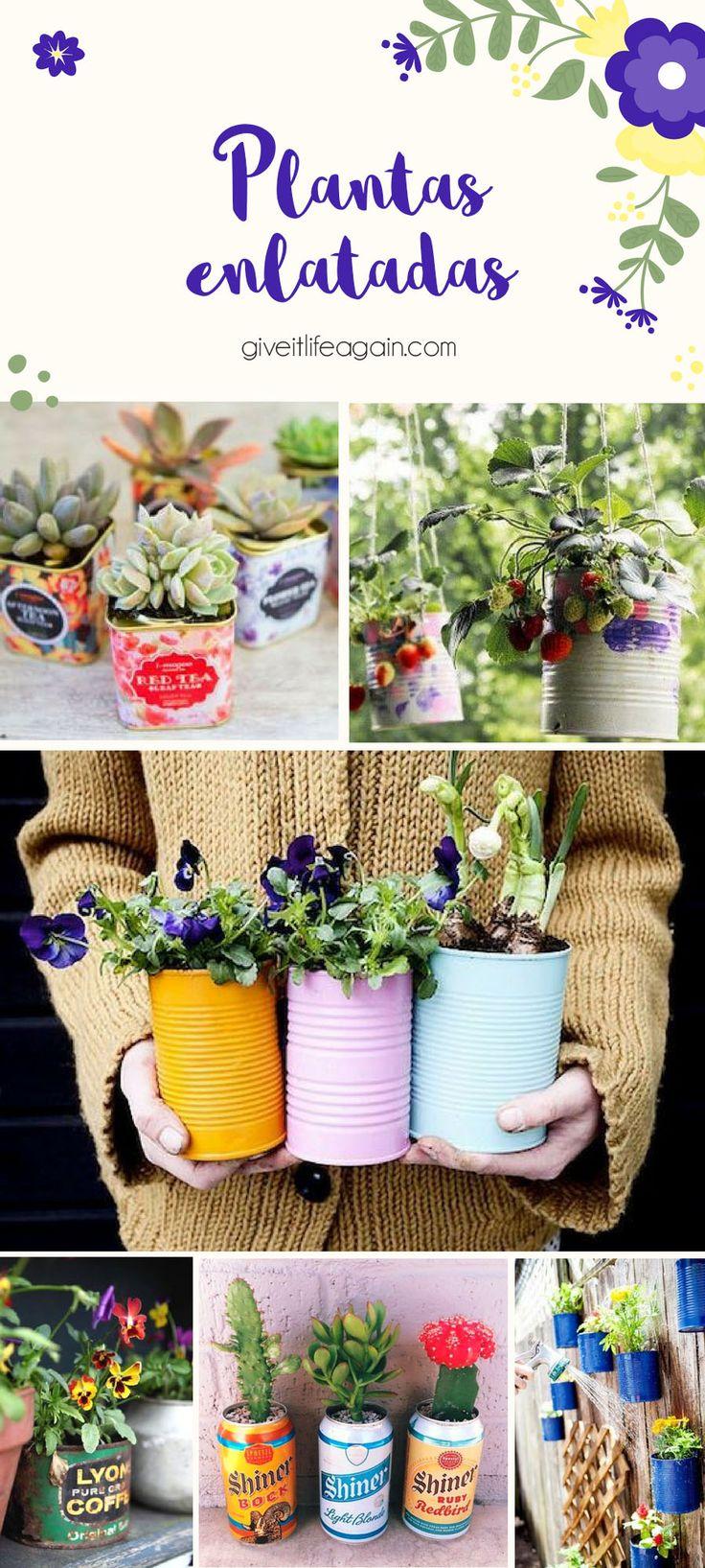Plantas en latas de conserva recicladas. Giveitliveagain