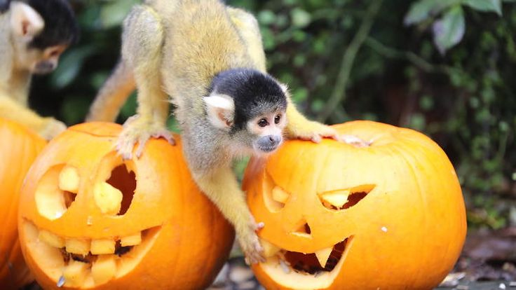 The Urban Monkey Guide: Top Things To Do With Kids This October Half Term (2016)