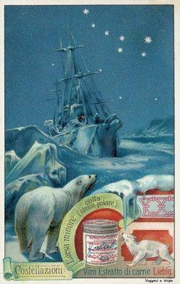 Lorsa minore (colla stella polare), 1903