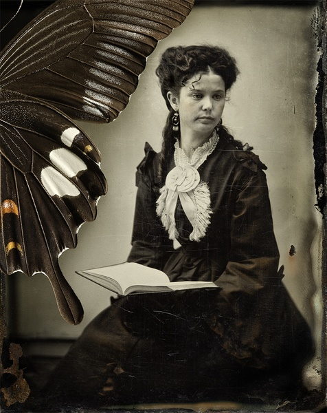 "Jo Whaley Papilionidae, 2010 Pigment Ink Photograph 20x24"" Image 1/10 www.photoeye.com/jowhaley"