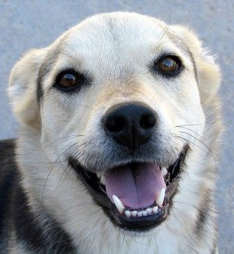 What is the Purpose of Dog Whiskers? | Canidae Blog