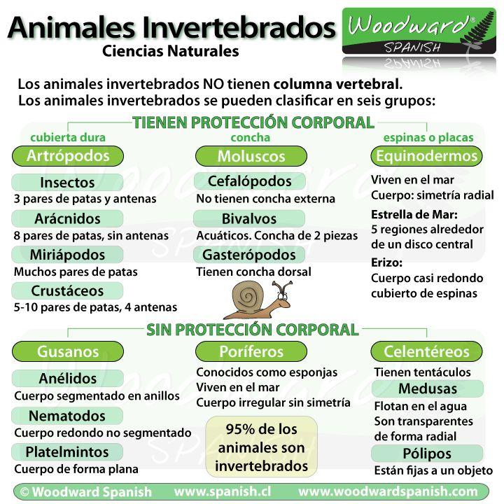 animales invertebrados clasificacion