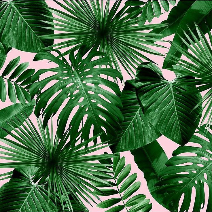 tropical wallpaper pattern - photo #17
