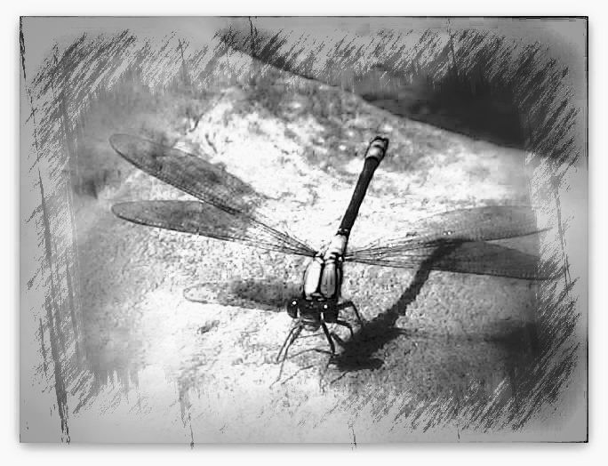 Sketch look of the oiginal dragonfly sitting on a rock which i have pinned on this board.