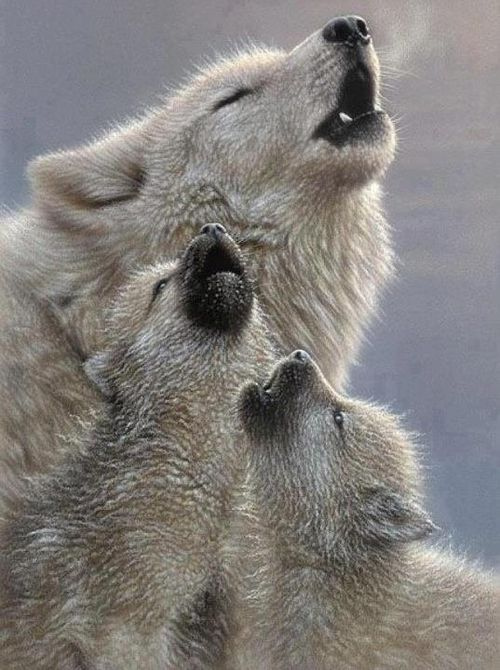 wolf and cubs tattoo | animals wolf wolves howl wolf cub