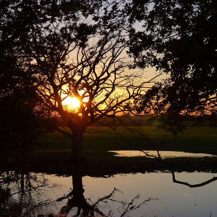sunlight. Sun. 26th. Oct. 2014