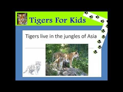 tiger facts for kids | fun facts about tigers