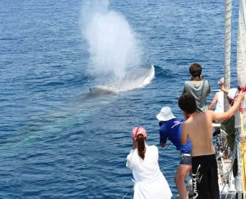 csr-fin-whale-people-photographing