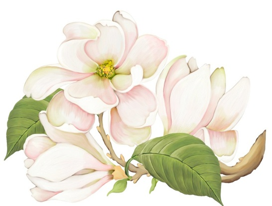 Joy HallModern Art, Art Watercolors, Kawaii Pictures, Art Inspiration, A Fundo Branco, Art Class, Pretty Pin, Joy Hall, Clips Art