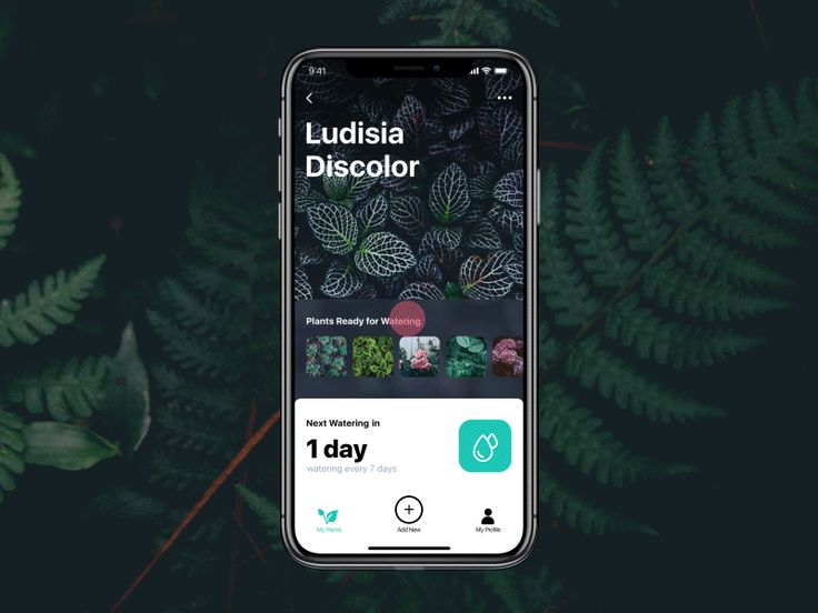 In our routine full of diverse tasks, mobile apps have become a great help. Let us show the UI concept for one more: here are some interactions for a watering tracker reminding users to water the p...