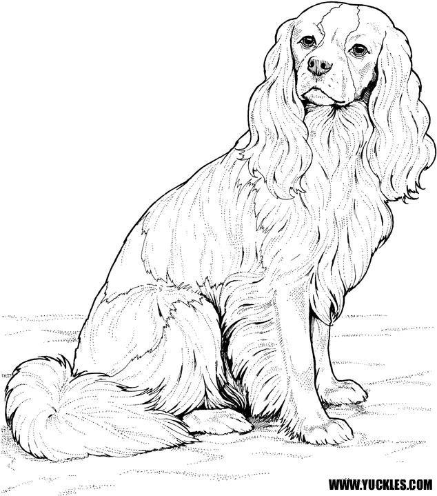 картинки красивых собак как в раскраске