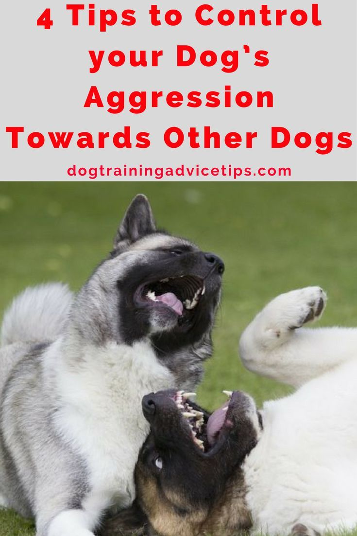 4 Tips To Control Your Dog S Aggression Towards Other Dogs Dog