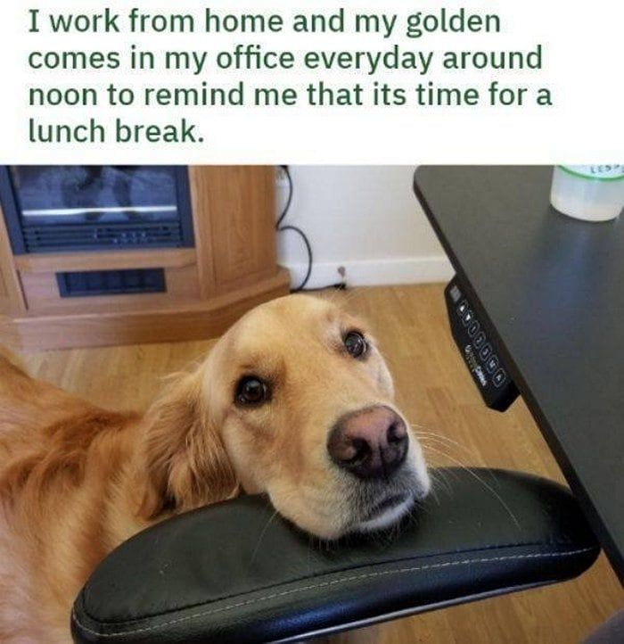 Wackyy The Ultimate Source Of Funny And Weird Products Cute Funny Animals Animal Memes Clean Silly Dogs