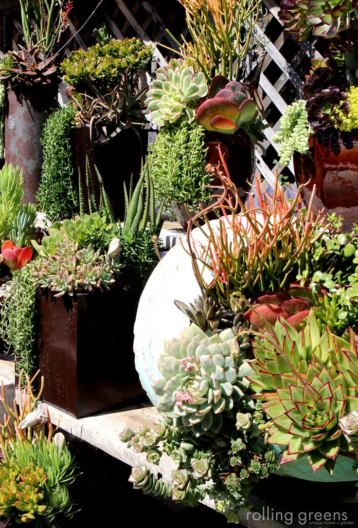 20428 best succulents flowers trees images on pinterest succulent plants plants and air plants. Black Bedroom Furniture Sets. Home Design Ideas