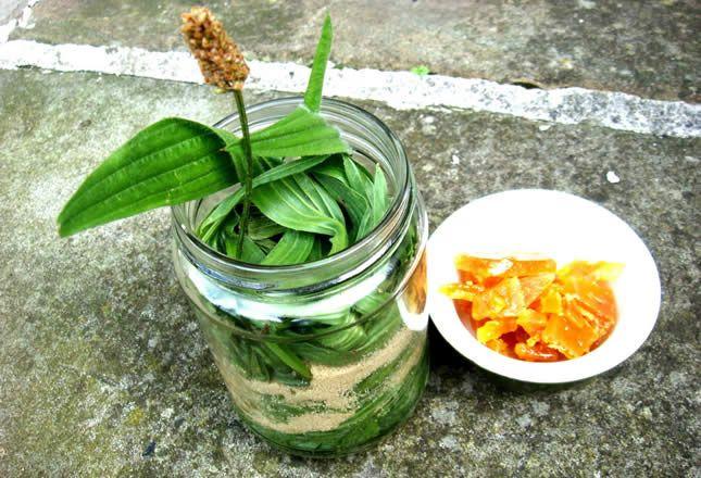 Sirup od bokvice – najbolji lijek za sve plućne bolesti kako napraviti sirup od bokvice