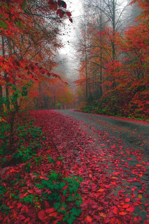 Argentina Patagonia en otoño