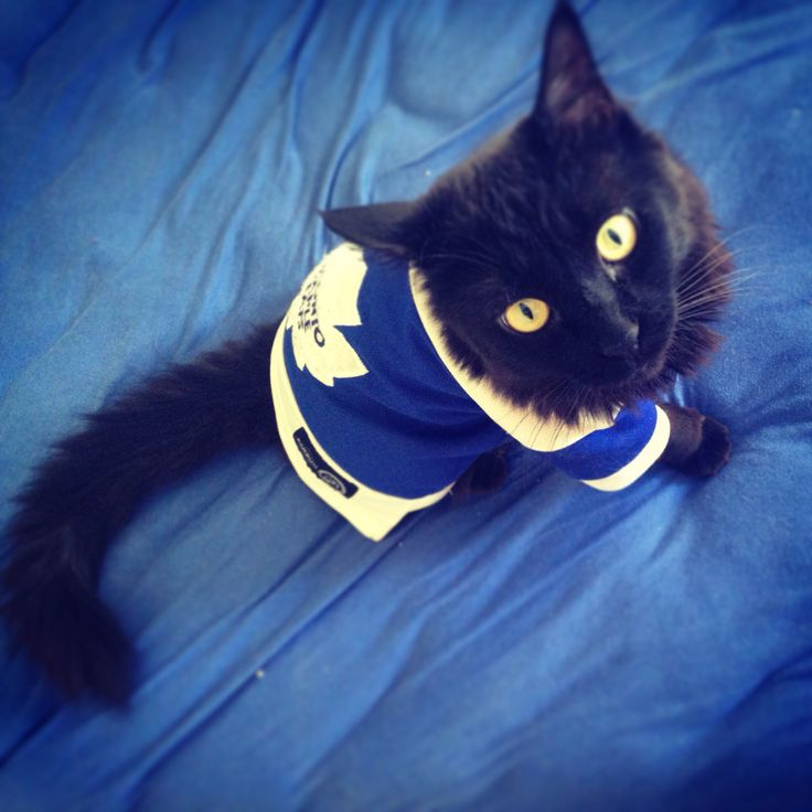 17 Best Images About Hockey Pets On Pinterest