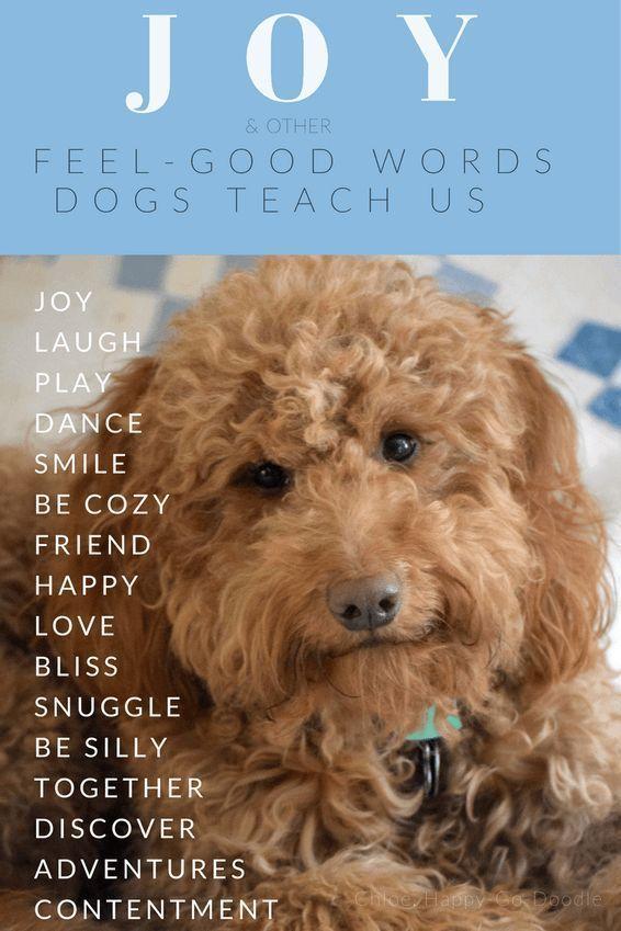 Joy And 16 Other Feel Good Words Dogs Teach Us Dog Love