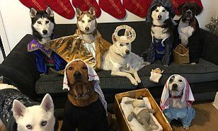 The serene biblical scene was recreated by the holiday-loving hounds' owners Sammie McCormick and 32-year-old support worker Cheryl Waddell at their home in Consett, County Durham.