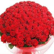 100 Hot and red roses bouquet.