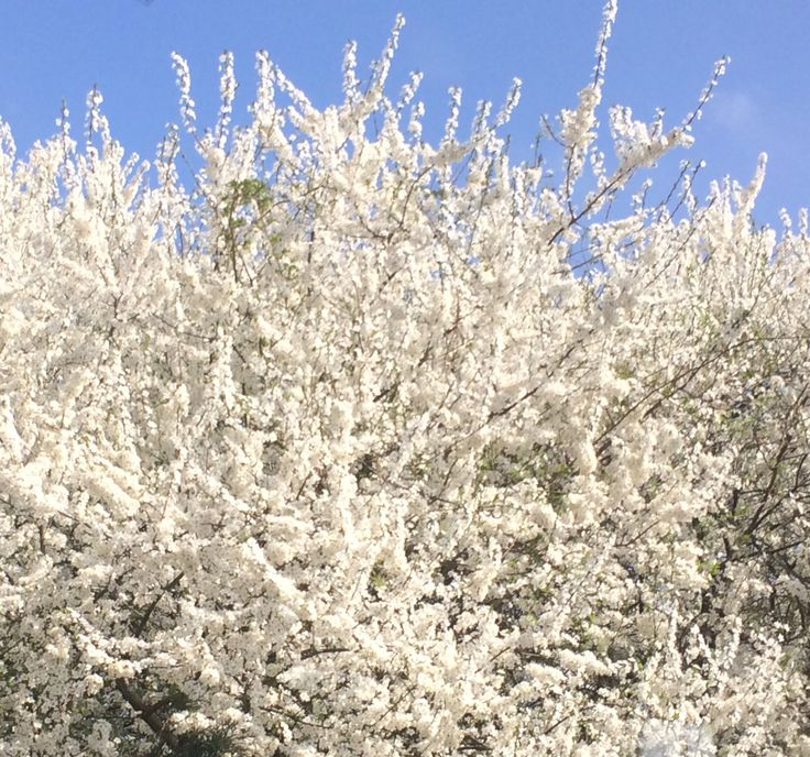7 best flowers blumen fleurs pflanzen images on Pinterest | Blumen ...