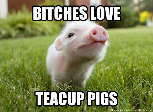 teacup pig :D! Yes they do!