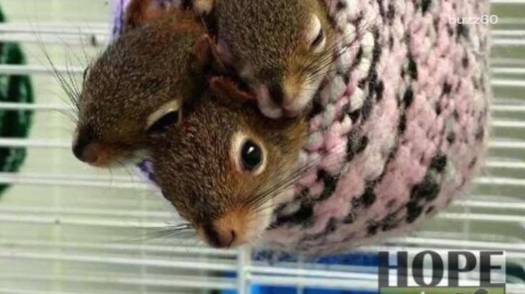 Hope for Wildlife is an organization in Nova Scotia that is dedicated to saving the lives of animals, including hundreds of squirrels. Gillian Pensavalle (@GillianWithaG) has the story.