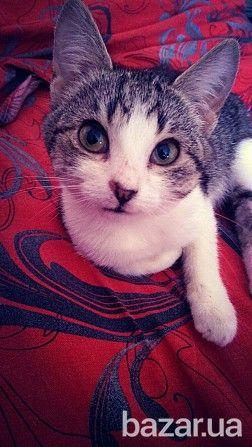 Малышке уже 3 месяца, выпали первые зубки. Чудесная домашняя кошка, игривая, с другими кошками уживается, правда очень любит играться с ними. К...