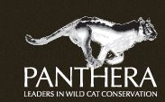 Panthera has brought together the world's leading wild cat experts to direct and implement effective conservation strategies for the world's largest and most endangered cats: tigers, lions, jaguars and snow leopards.