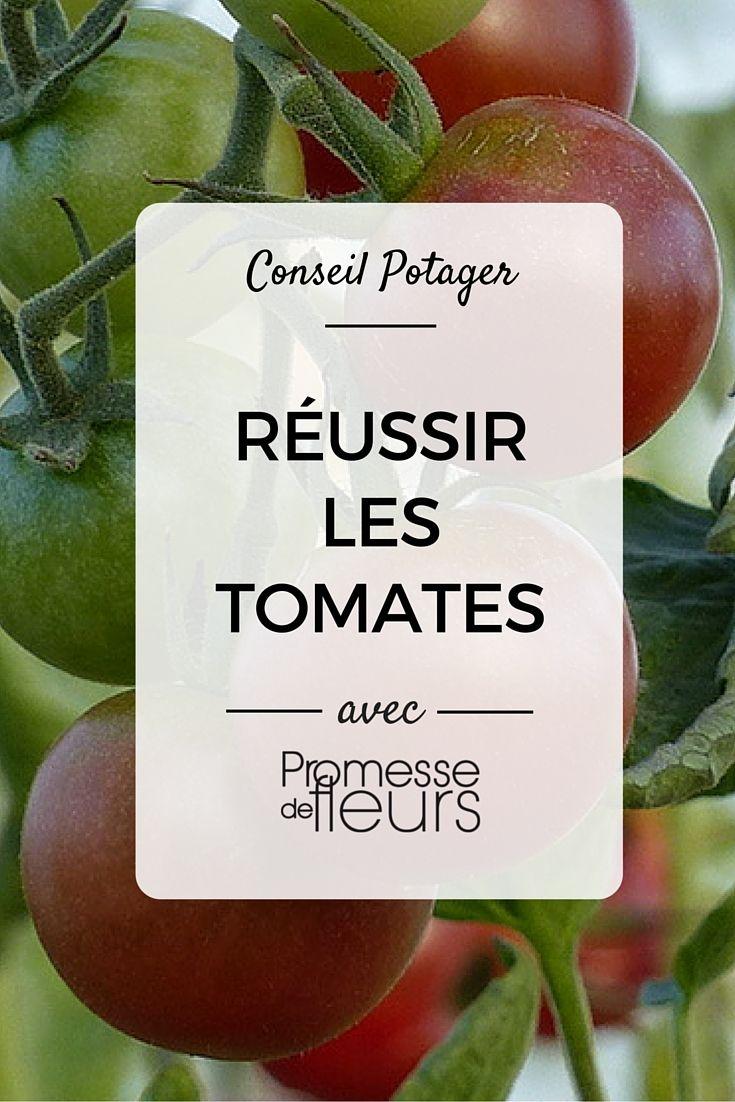 Nos conseils pour réussir les tomates au potager : semis, plantation, taille et lutte contre les maladies #potager #tomate #promessedefleurs