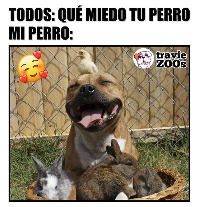 Es Un Amor De Perrito Amor De Perro Memes De Perros Chistosos Memes Perros